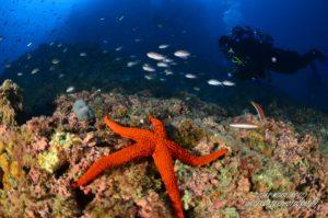 Diving Spain